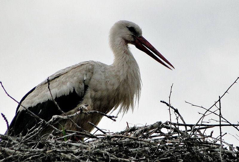 Ptaki na zdjęciach. Fot. Irena Bykowska