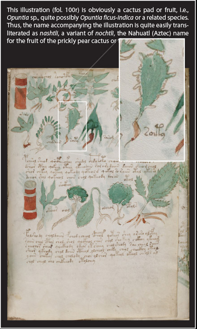 manuskrypt_voynicha_kaktus
