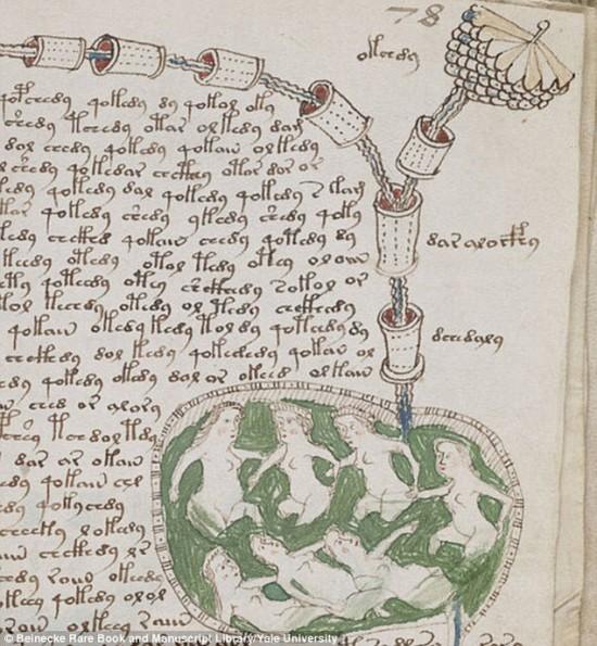 manuskrypt_voynicha_nimfy