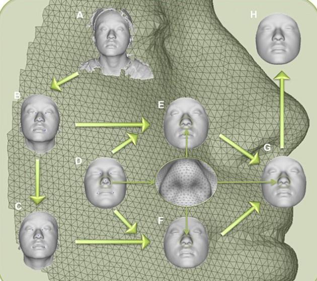Komputerowy model opracowany na podstawie algorytmu. Foto:  Pennsylvania State University