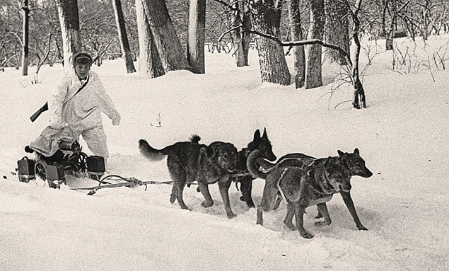 W czasie II wojny świtowej psy były najbardziej liczebną żywą bronią. Foto:     ITAR - TASS
