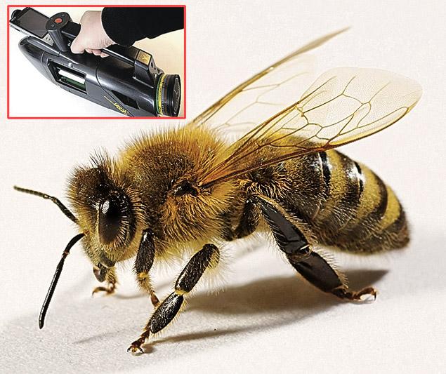 Pszczoła rozpoznaje zapach materiału wybuchowego, a odpowiednie urządzenie rejestruje ten sygnał. Foto: youtube.com